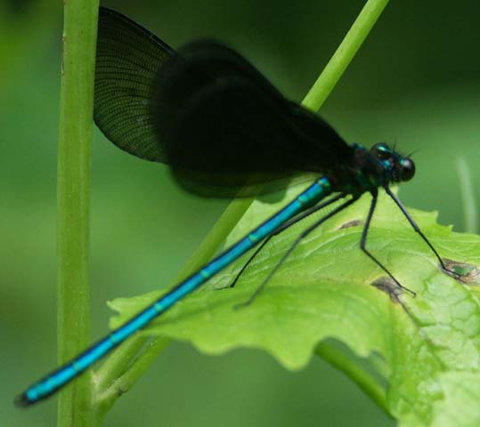 Tail Of The Dragon Photos >> Jon Tulloch Photography - Insects